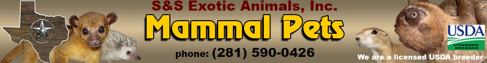 MammalPets : Buy live animals online
